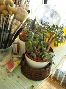 One of Plants that live in my studio