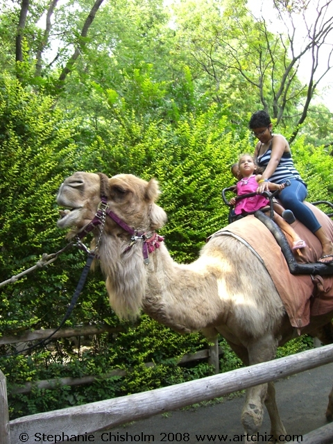 QUICK get on the Camel Ride Line